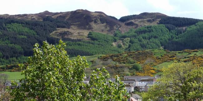 Work to halt tree disease at Beinn Ghuilean to start in 2020
