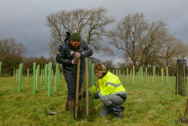 £50 million scheme launched to boost tree planting
