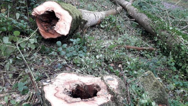 Hundreds of trees to be felled in Hampshire woodland