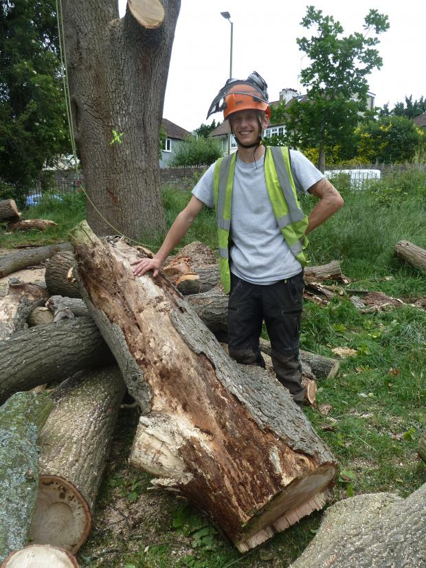 Forestry Journal: The veteran oak at Victoria Playing Field displayed significant fungal rot and the reason for its removal for public safety reasons. James Ellary pictured.