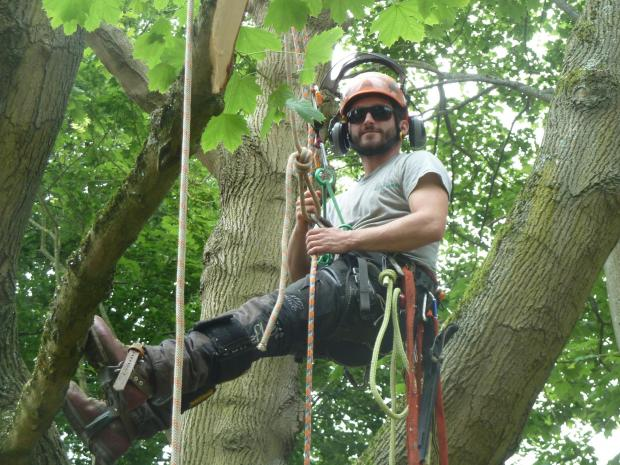 Forestry Journal: Sam Arnold, safe and secure but highly mobile with a Petzel Zig-Zag and Hitch Climber system.