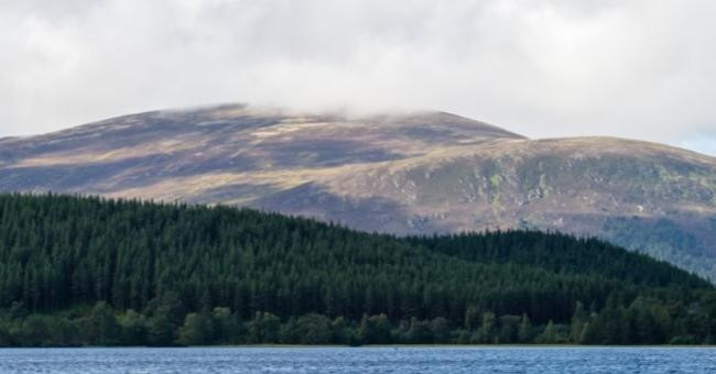 Views sought on Scottish Forestry corporate plan
