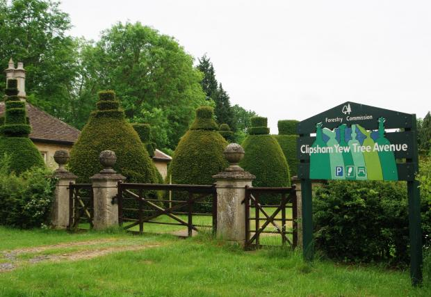 Forestry Journal: The Forestry Commission maintained the Clipsham Yew Tree Avenue from 1955 until the early 21st century. An informative leaflet included a 'fun' treasure trail designed to encourage visitors of all ages to study the topiaries closely.