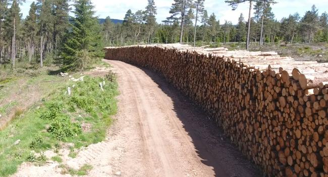 Timber supply chain open for business this month, CTI survey says