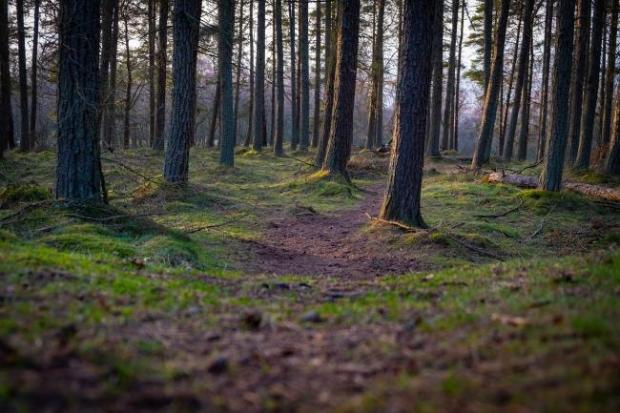 Over 13,000 ha of new UK woodland created in 2019–20, report shows