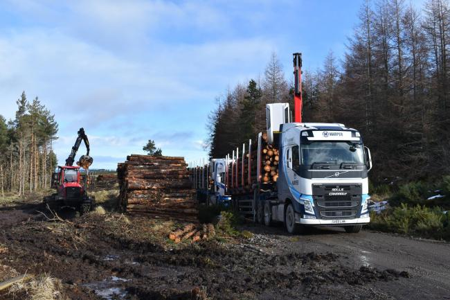 Timber trade urged to prepare for end of Brexi transition period