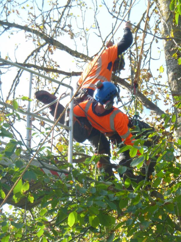 Forestry Journal: Nathan Chapman (rescuer) and Jamie Barton (casualty) descending the birch.