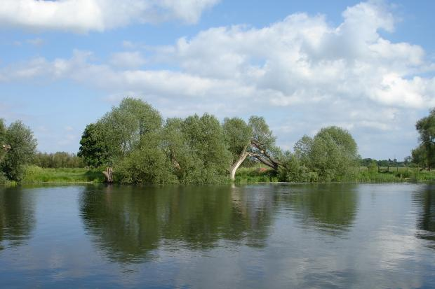 Big willows by the waterside – white and crack willow trees alongside the River Great Ouse in Cambridgeshire.