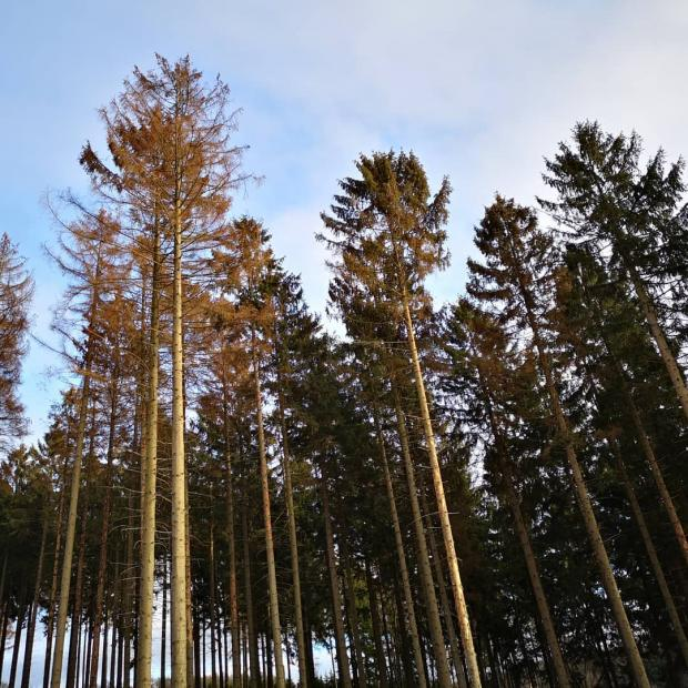 Forestry Journal: Scenes like this are now common across Germany's forests.