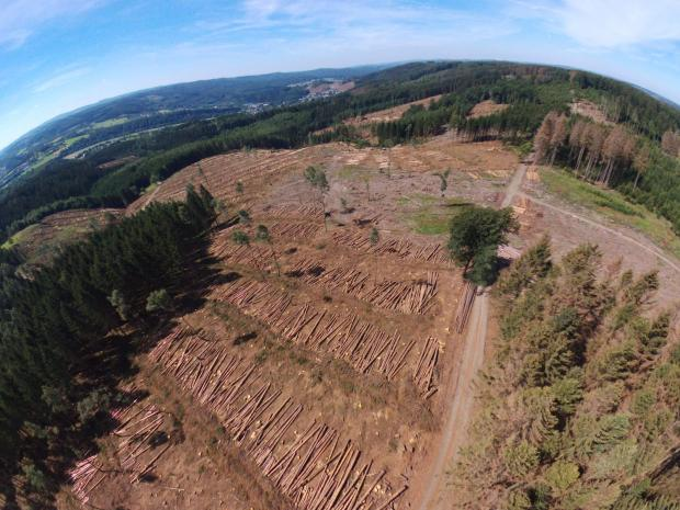 Forestry Journal: Damaged logs need to be harvested as soon as possible, which has had a serious knock-on effect on production.