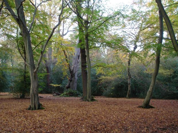 Forestry Journal: Autumn's last hurrah inside a mixed beech and hornbeam wood.